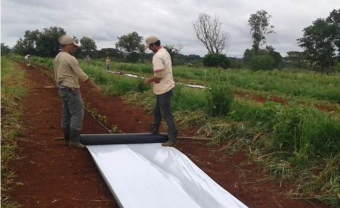 farm laborers in field distributing mulch
